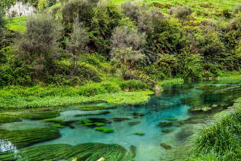 The Beautiful Blue Spring, Putaruru, Waikato, Nieuw-Zeeland